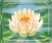 Rf flower